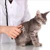 Ветеринарные клиники в Большом Солдатском